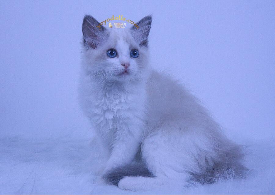 美猫照片一组