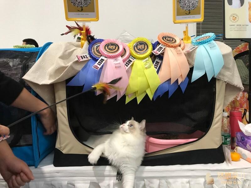 小猫比赛成绩不错
